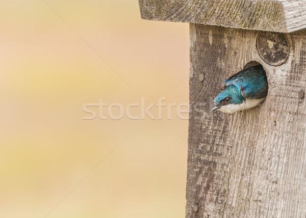 ツリー 鳥 動物 ペア 野生動物 ストックフォト © brm1949