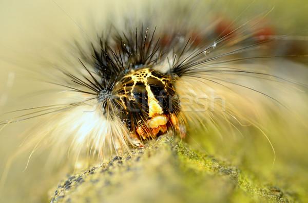 Tırtıl makro ahşap doğa Stok fotoğraf © brm1949