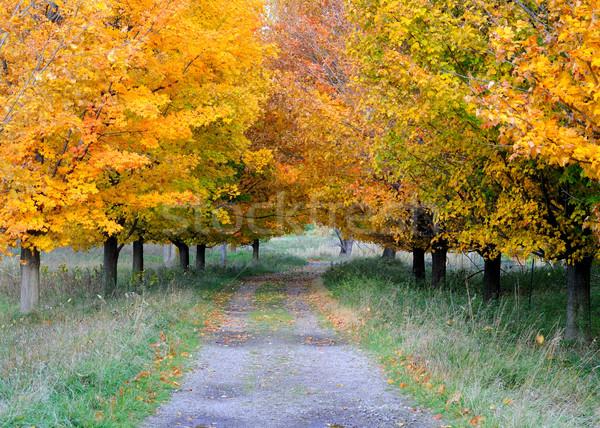 Autumn Footpath Stock photo © brm1949