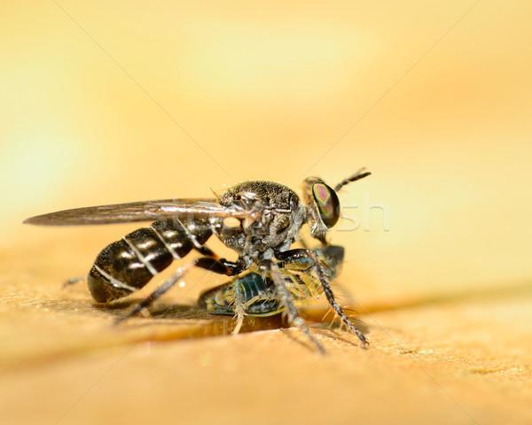 Soyguncu uçmak ahşap yeme Stok fotoğraf © brm1949