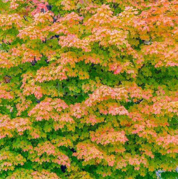 ősz juhar levelek kép művészet tapéta Stock fotó © brm1949