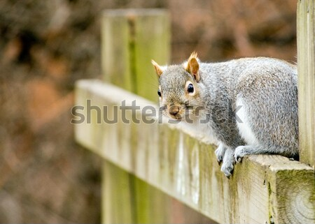 Chipmunk On A Post Stock photo © brm1949