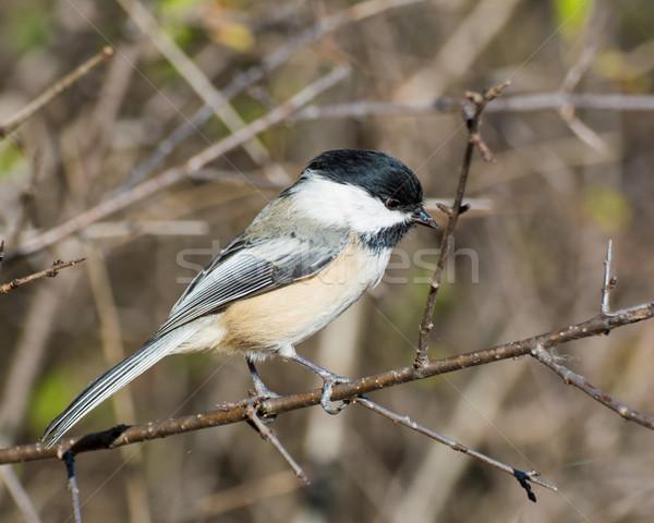 природы птица животного лесу улице Сток-фото © brm1949