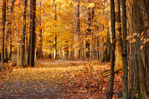 Autumn Nature Trail Stock photo © brm1949