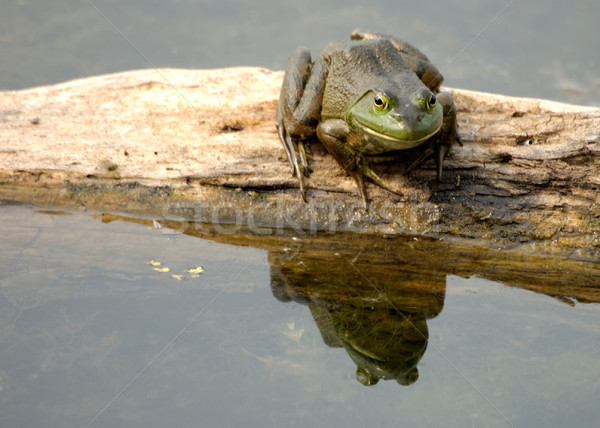 Сток-фото: сидят · природы · болото · живая · природа · фауна