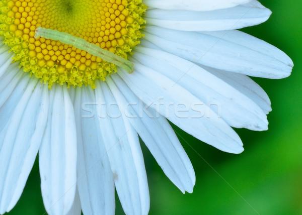 虫 マクロ クローズアップ 庭園 動物 ストックフォト © brm1949