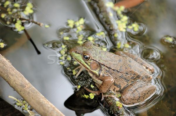 Сток-фото: сидят · мелкий · воды · болото