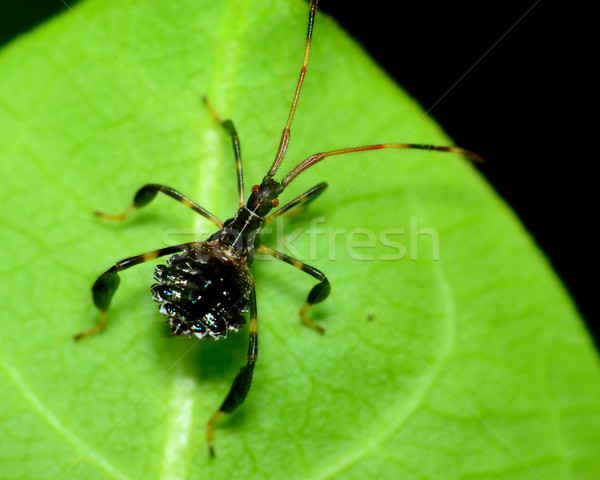 Asesino error planta hoja insectos aire libre Foto stock © brm1949