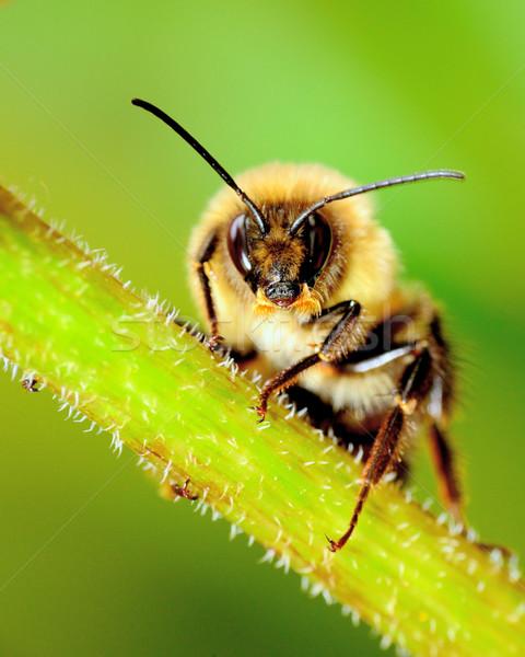 Arı bitki kök böcek makro Stok fotoğraf © brm1949