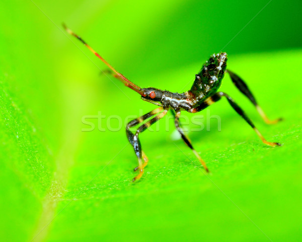 Assassino bicho planta folha inseto ao ar livre Foto stock © brm1949