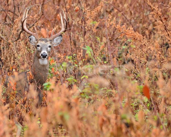 鹿 バック 立って 男性 ストックフォト © brm1949