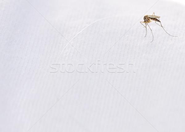 Zanzara bianco cotone shirt bug Foto d'archivio © brm1949