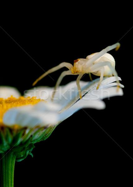 Krab spin plant wachten buit dier Stockfoto © brm1949