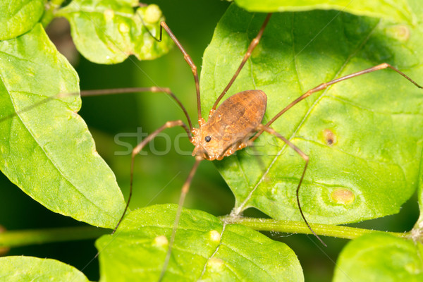 Aranha folha verde animal inseto animais selvagens Foto stock © brm1949