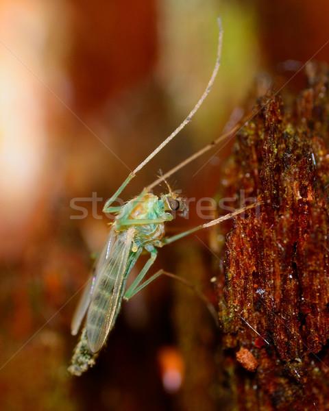 Zanzara natura animale macro biologia Foto d'archivio © brm1949