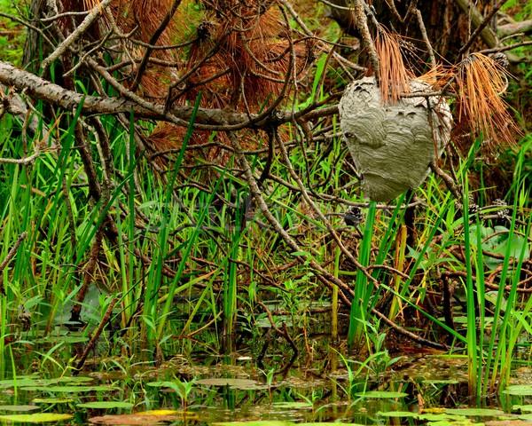 Yuva asılı ağaç bataklık yaz ay Stok fotoğraf © brm1949