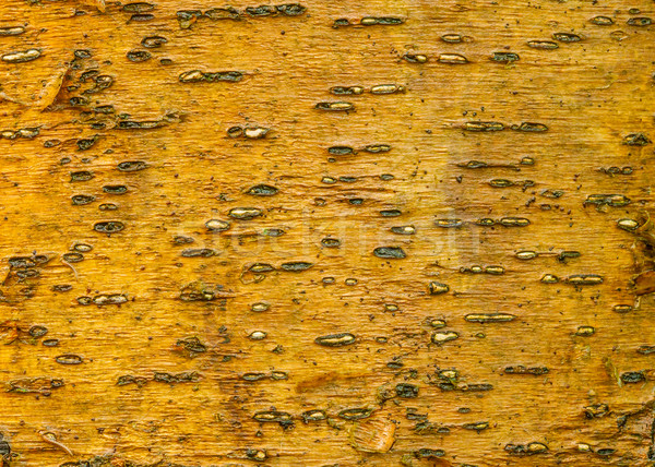 дерево Кора обои искусства текстуры лес Сток-фото © brm1949