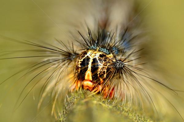 Lagarta macro cabeça flor natureza Foto stock © brm1949