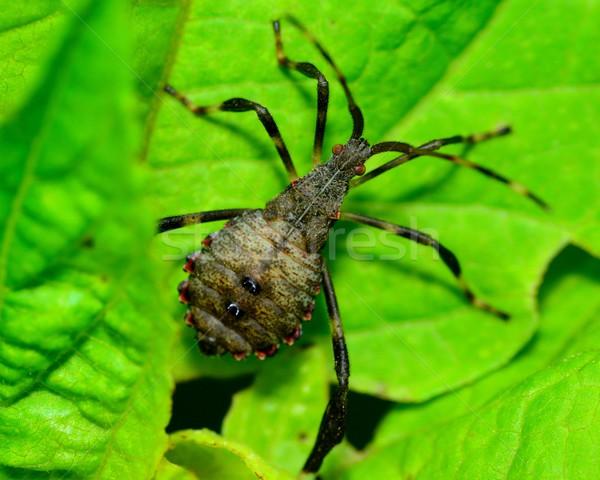 Asesino error verde planta hoja insectos Foto stock © brm1949