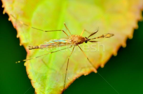 Verde impianto foglia insetto bug virus Foto d'archivio © brm1949