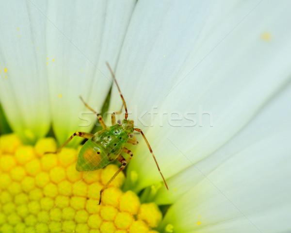 Impianto bug primavera natura animale macro Foto d'archivio © brm1949
