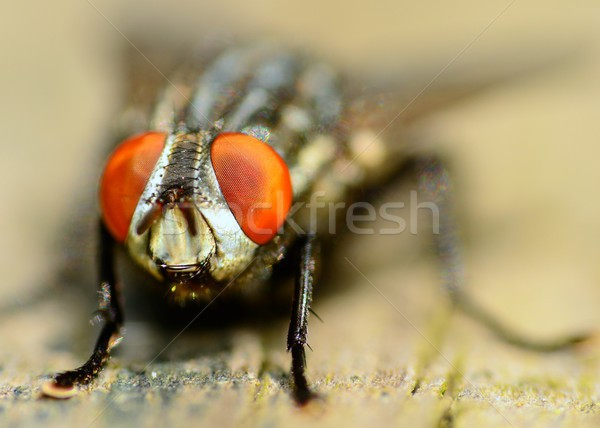 Fly On A Wooden Plank Stock photo © brm1949