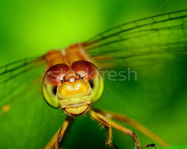 蜻蜓 宏 射擊 飛 動物 商業照片 © brm1949