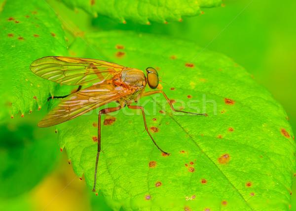 Makró közelkép zöld levél természet légy rovar Stock fotó © brm1949