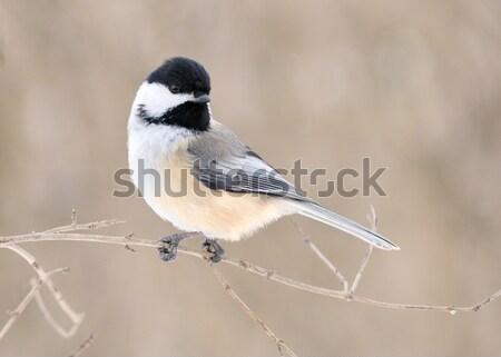 Charakter ptaków zwierząt lesie odkryty Zdjęcia stock © brm1949