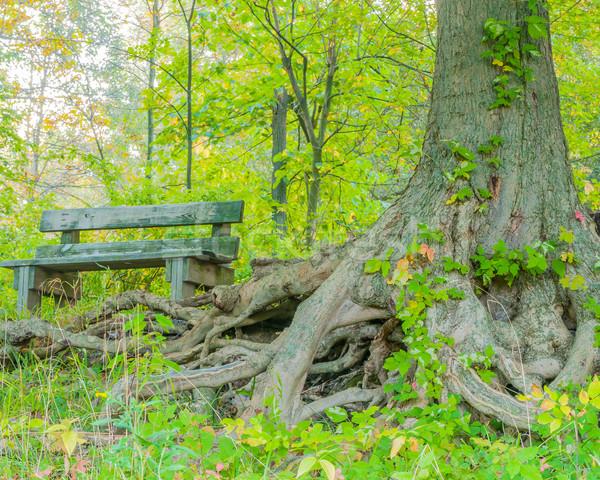 公園 ベンチ 森 ツリー 根 自然 ストックフォト © brm1949