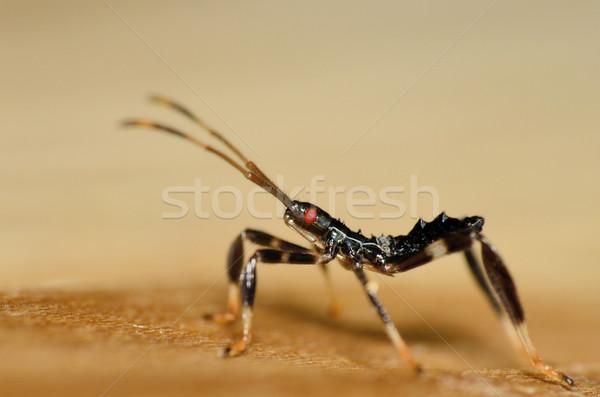 Assassino bug legno insetto esterna Foto d'archivio © brm1949