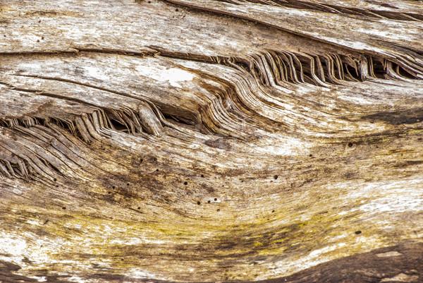Tree Stump Background Stock photo © brm1949