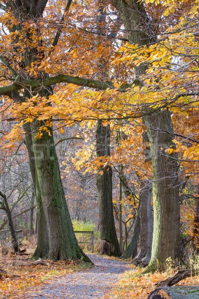 осень тропе сцена местный парка Осенний сезон Сток-фото © brm1949