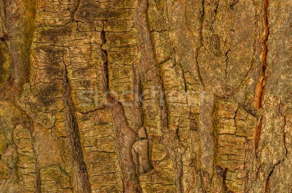 Drzewo kory tapety sztuki tekstury lasu Zdjęcia stock © brm1949