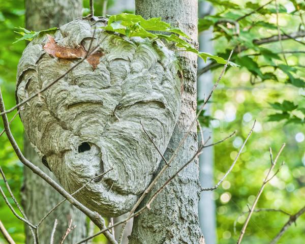 Kovan asılı orman orman doğa Stok fotoğraf © brm1949