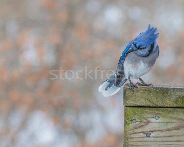 Kék fa posta természet madár állat Stock fotó © brm1949