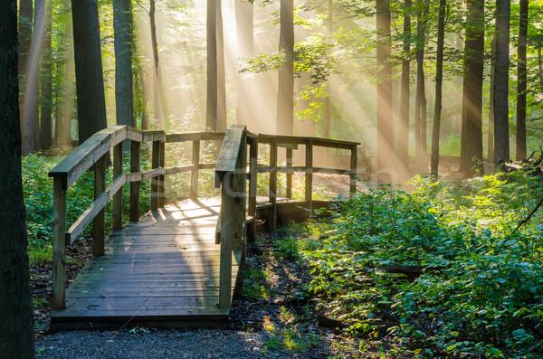 午前 光 日光 自然 森林 ストックフォト © brm1949