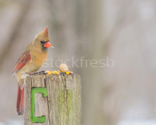Feminino madeira postar pássaro Foto stock © brm1949