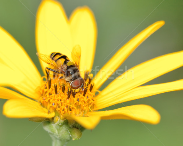 Bee On A Flower Stock photo © brm1949
