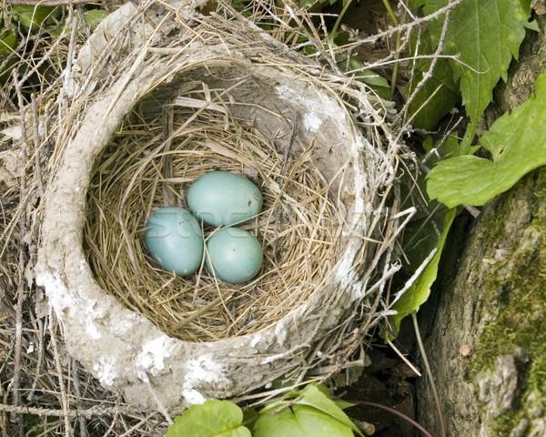巣 卵 3  自然 森 ストックフォト © brm1949