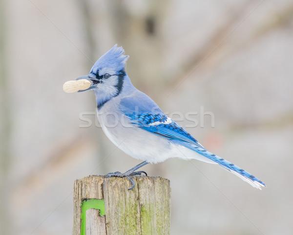 青 木材 ポスト 自然 鳥 動物 ストックフォト © brm1949