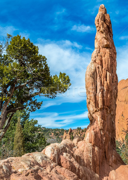 Bahçe manzara Colorado ABD doğa dağ Stok fotoğraf © brm1949