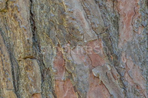 ツリー 樹皮 壁紙 芸術 テクスチャ 森林 ストックフォト © brm1949