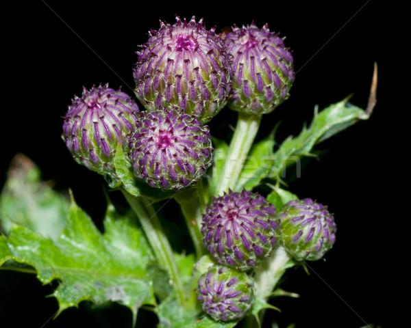 Kwiat makro kwiat charakter lata Zdjęcia stock © brm1949
