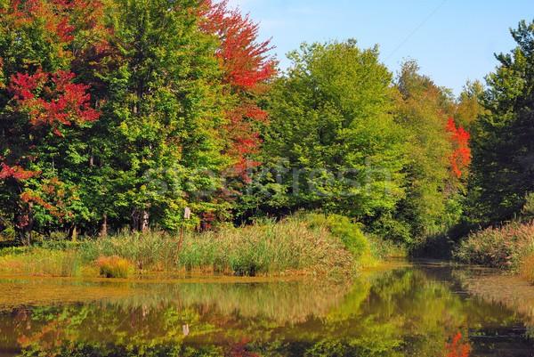 Moeras landschap groene laat zomer seizoen Stockfoto © brm1949