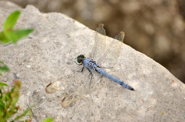Dragonfly Top рок природы насекомое Сток-фото © brm1949