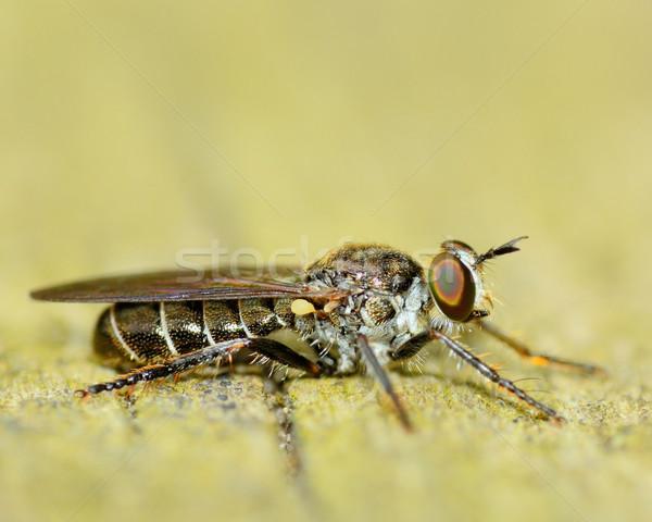 Uçmak ahşap makro doğa Stok fotoğraf © brm1949