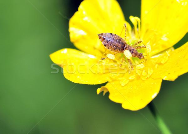 Méh merénylő rovar rovar Stock fotó © brm1949
