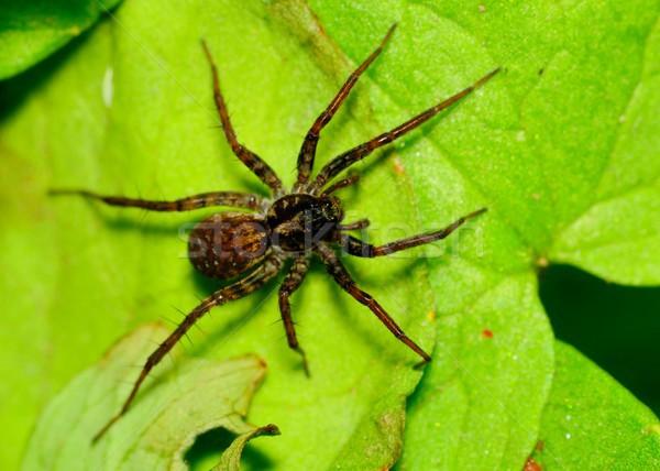 Kurt örümcek yeşil bitki yaprak doğa Stok fotoğraf © brm1949