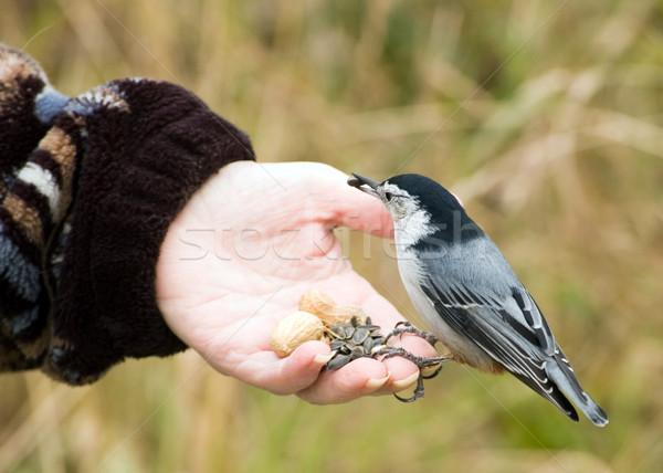 Bird In Hand Stock photo © brm1949